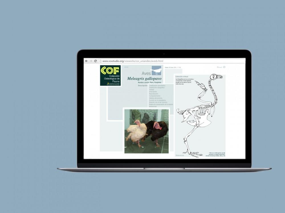 Colección Osteológica de Fauna – COF